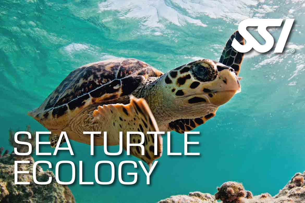 SSI Sea Turtle Ecology